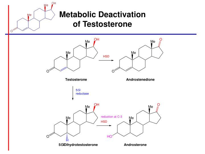 Metabolic Deactivation