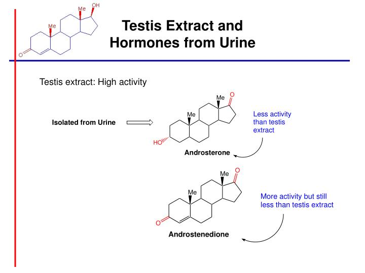 Testis Extract and