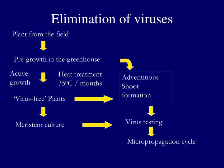 Elimination of viruses