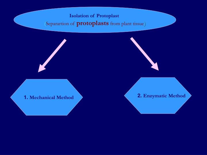 Isolation of Protoplast
