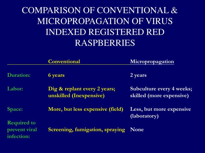COMPARISON OF CONVENTIONAL & MICROPROPAGATION OF VIRUS INDEXED REGISTERED RED RASPBERRIES