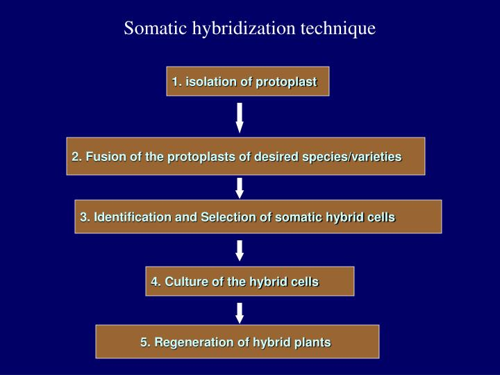 Somatic hybridization technique