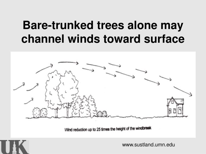 Bare-trunked trees alone may channel winds toward surface