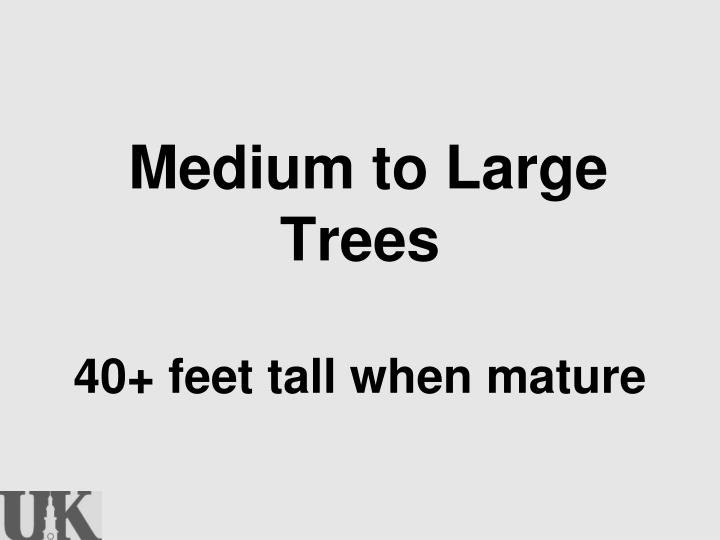 Medium to Large Trees
