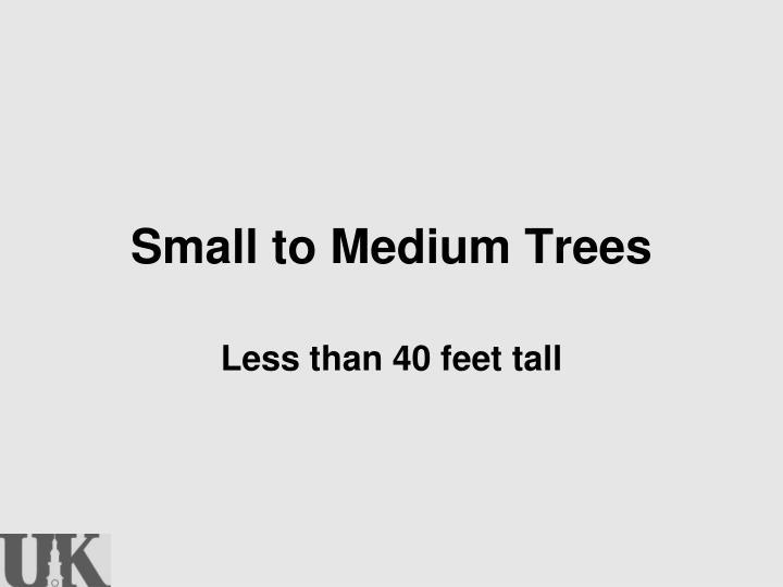Small to Medium Trees