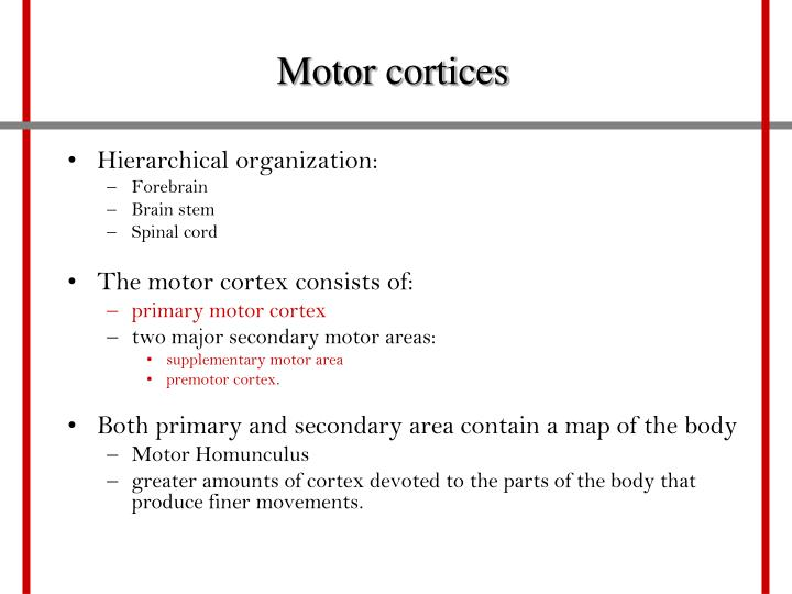 Motor cortices