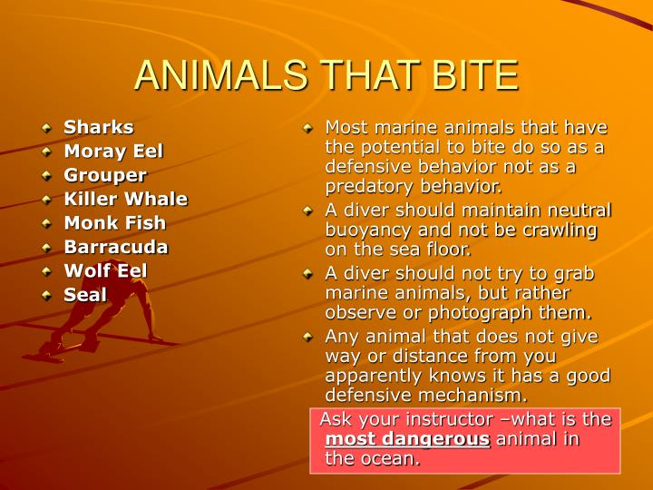 Animals that bite