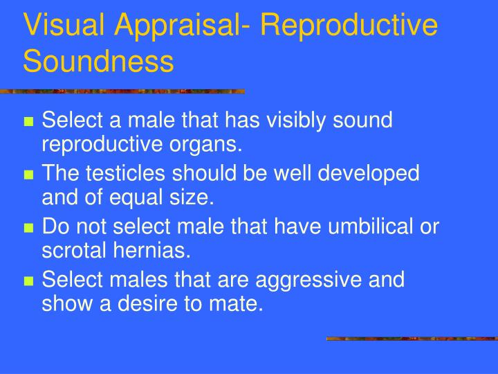 Visual Appraisal- Reproductive Soundness