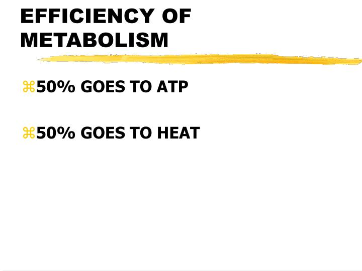 EFFICIENCY OF METABOLISM