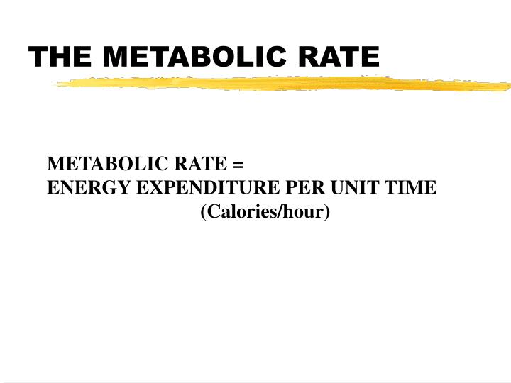 The metabolic rate