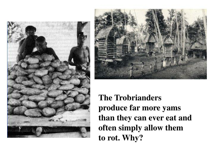 The Trobrianders produce far more yams than they can ever eat and often simply allow them to rot. Why?