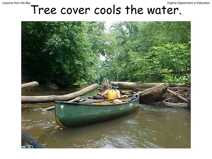 Tree cover cools the water.