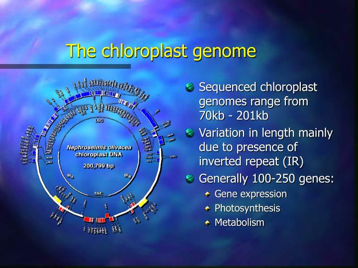 The chloroplast genome