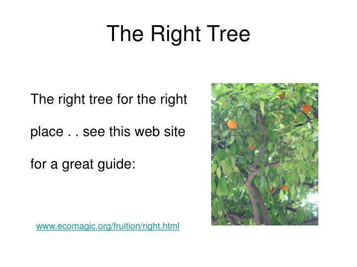 The Right Tree