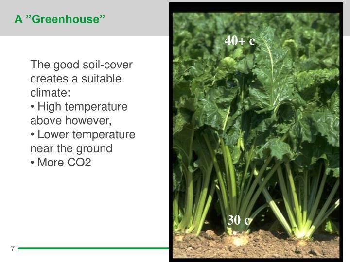 """A """"Greenhouse"""""""