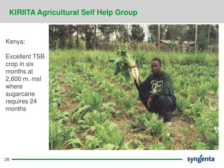 KIRIITA Agricultural Self Help Group