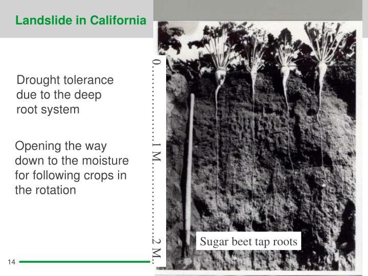 Landslide in California
