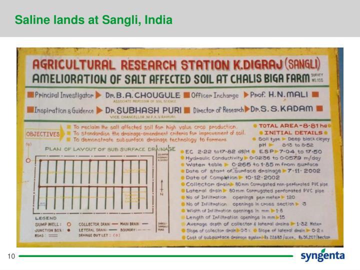 Saline lands at Sangli, India