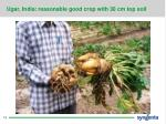 ugar india reasonable good crop with 30 cm top soil