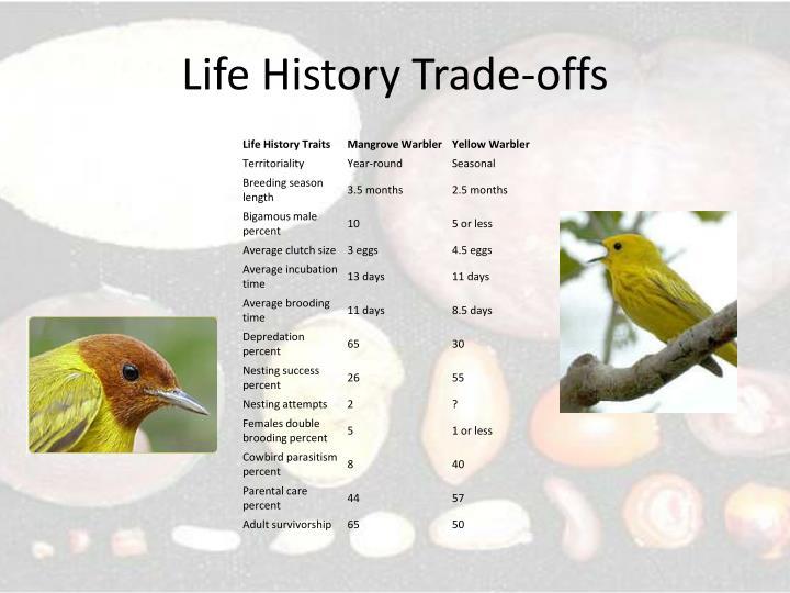 Life History Trade-offs