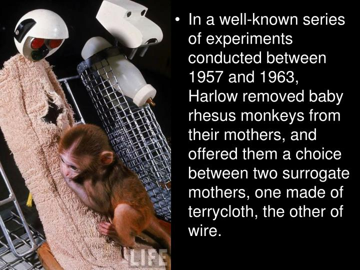 In a well-known series of experiments conducted between 1957 and 1963, Harlow removed baby rhesus monkeys from their mothers, and offered them a choice between two surrogate mothers, one made of terrycloth, the other of wire.