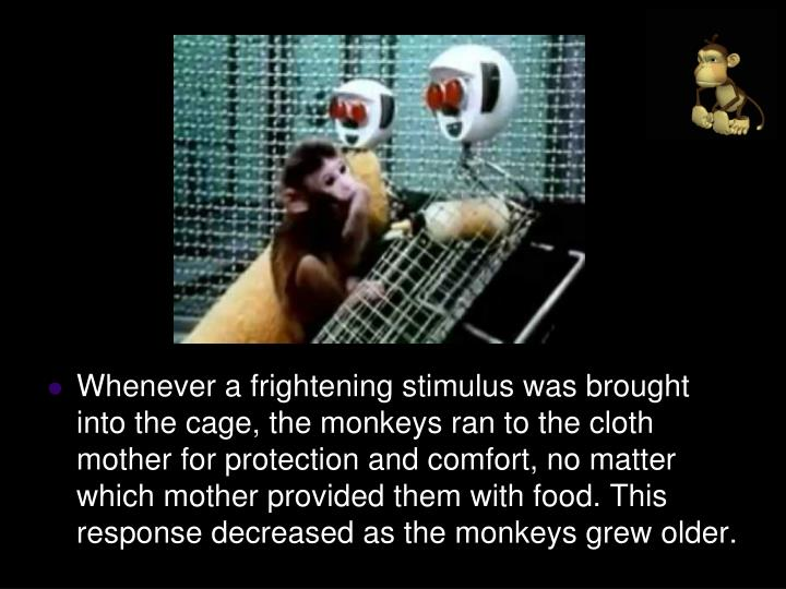 Whenever a frightening stimulus was brought into the cage, the monkeys ran to the cloth mother for protection and comfort, no matter which mother provided them with food. This response decreased as the monkeys grew older.