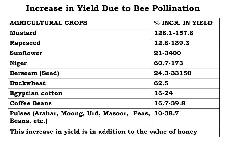 Increase in Yield Due to Bee Pollination