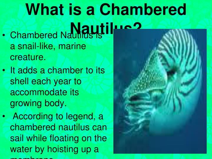 What is a Chambered Nautilus?