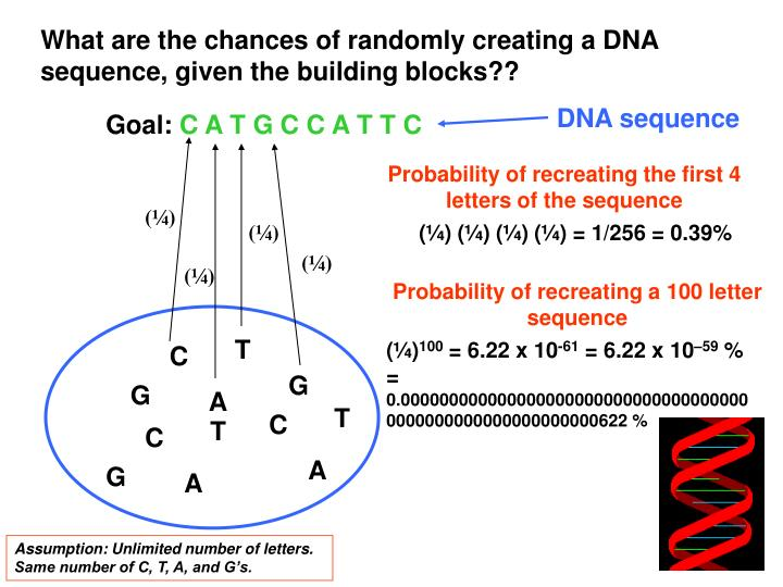 What are the chances of randomly creating a DNA sequence, given the building blocks??