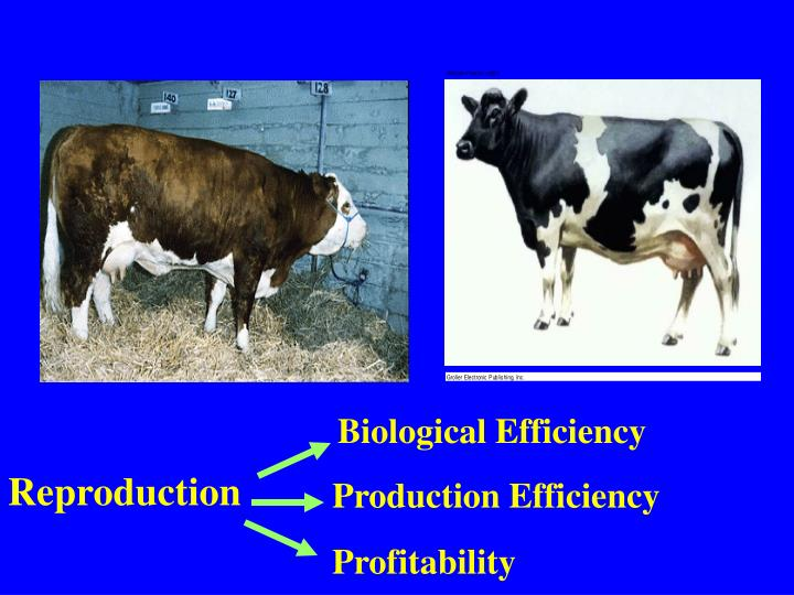 Biological Efficiency