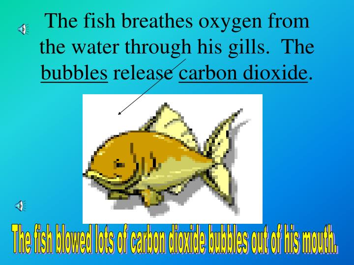 The fish breathes oxygen from the water through his gills.  The