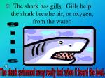 the shark has gills gills help the shark breathe air or oxygen from the water