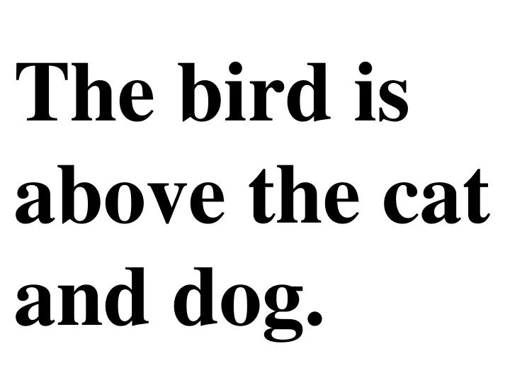 The bird is above the cat and dog.