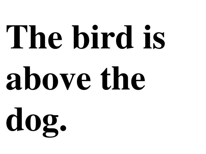 The bird is above the dog.