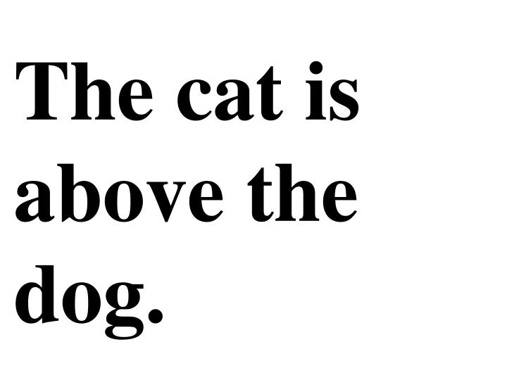 The cat is above the dog.
