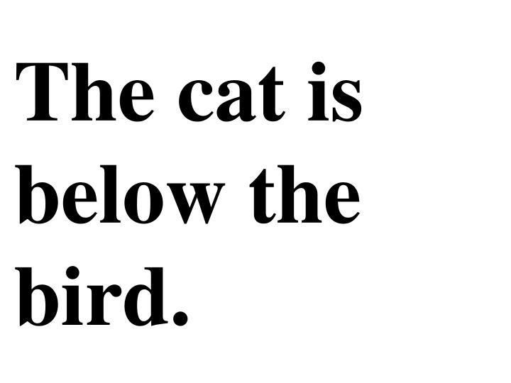 The cat is below the bird.