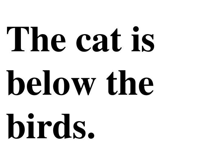 The cat is below the birds.