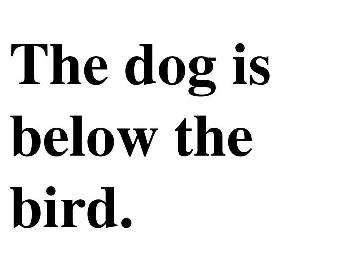 The dog is below the bird.