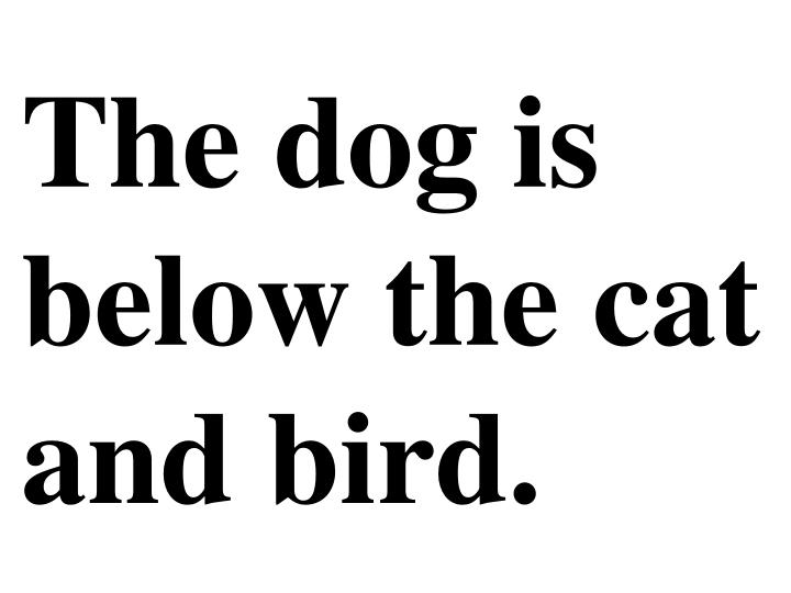 The dog is below the cat and bird.