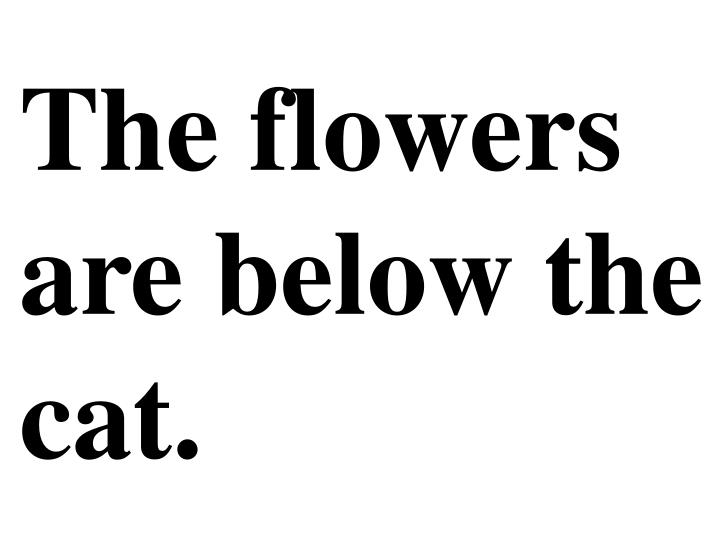 The flowers are below the cat.