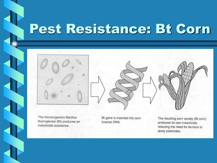 Pest Resistance: Bt Corn