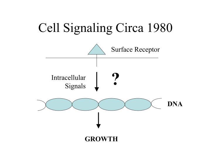 Cell Signaling Circa 1980