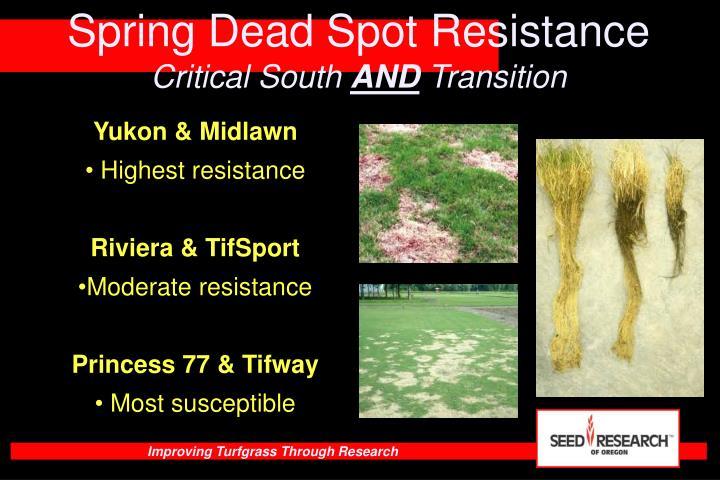 Spring Dead Spot Resistance