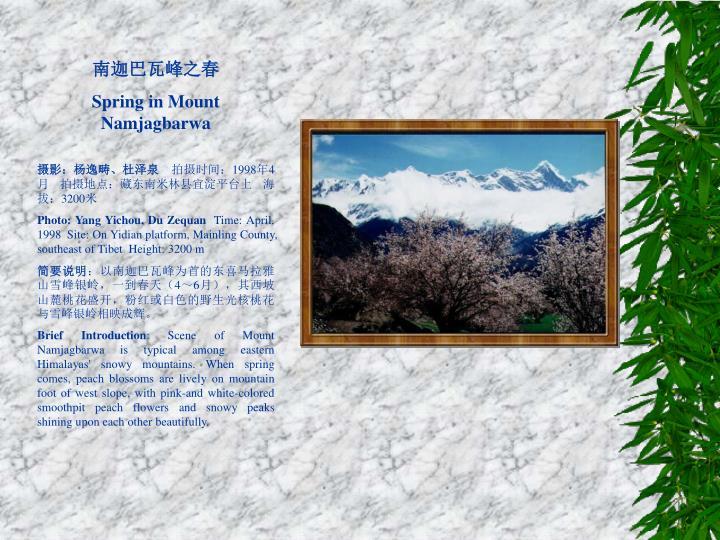 南迦巴瓦峰之春