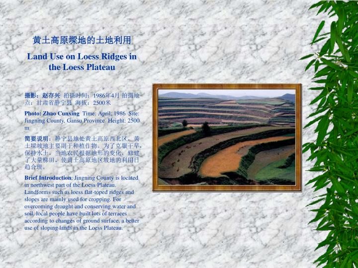 黄土高原墚地的土地利用