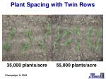 plant spacing with twin rows