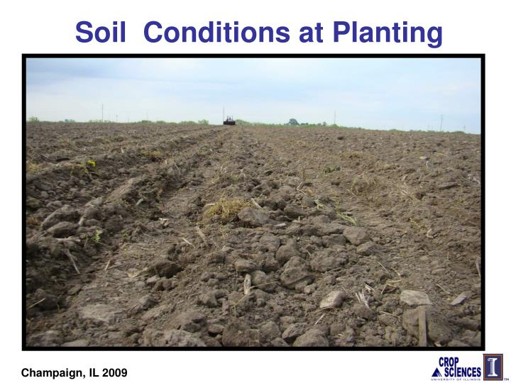 Soil  Conditions at Planting