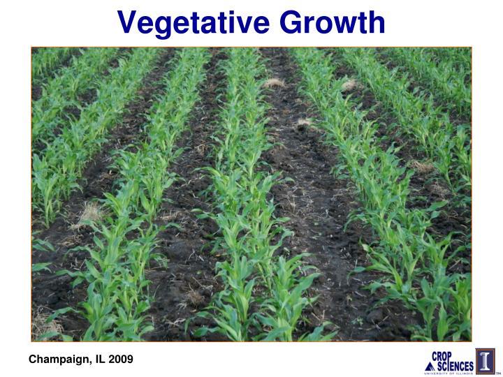 Vegetative Growth