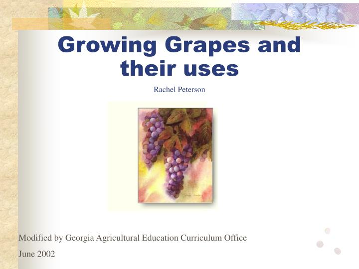 Growing grapes and their uses rachel peterson