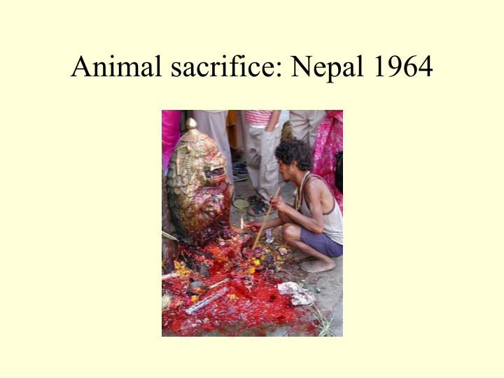Animal sacrifice: Nepal 1964